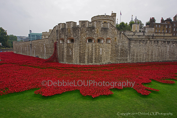 Red Poppies at London Tower